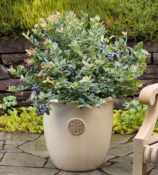 plantas-que-no-esperarias-ver-en-macetas-07