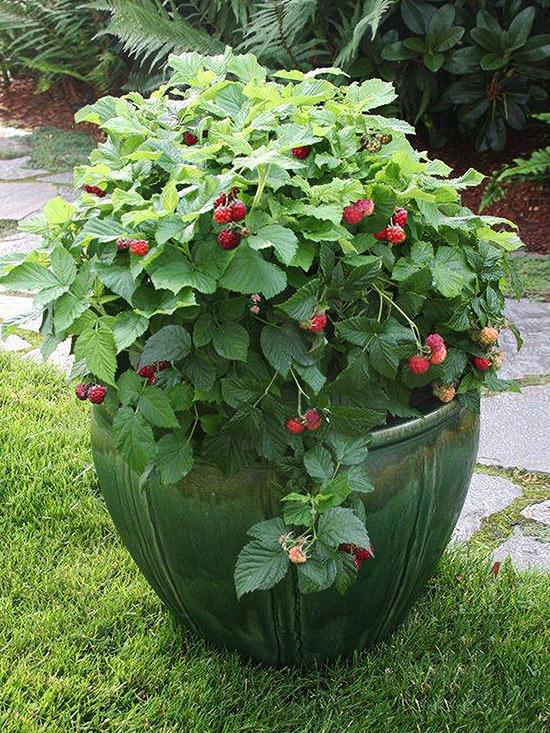 plantas-que-no-esperarias-ver-en-macetas-08