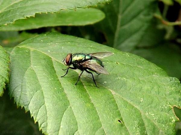 remedios-naturales-contra-las-moscas-01