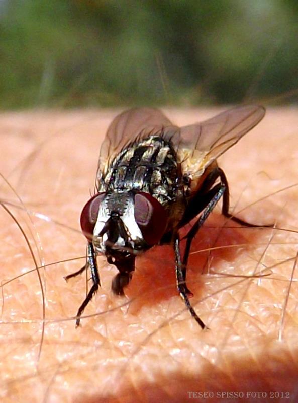remedios-naturales-contra-las-moscas-02