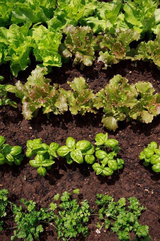 5-consejos-para-el-horticultor-novel-01