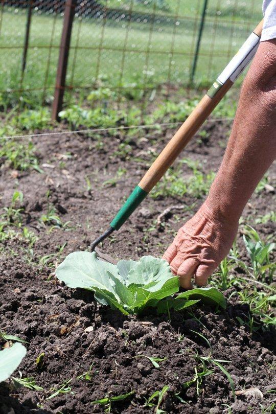 5-consejos-para-el-horticultor-novel-04