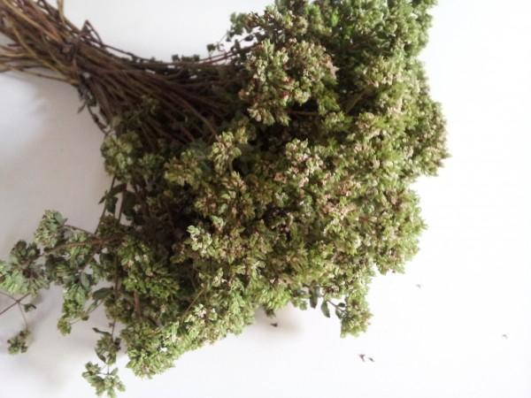 cultivo-y-conservacion-del-oregano-03