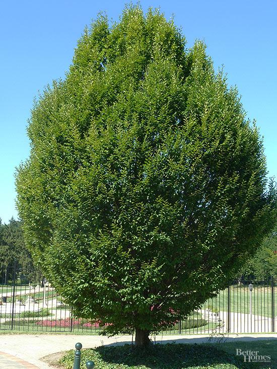 Los mejores rboles de sombra para tu jard n for Tipos de arboles para plantar en casa
