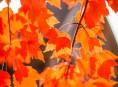 imagen Los mejores árboles de sombra para tu jardín