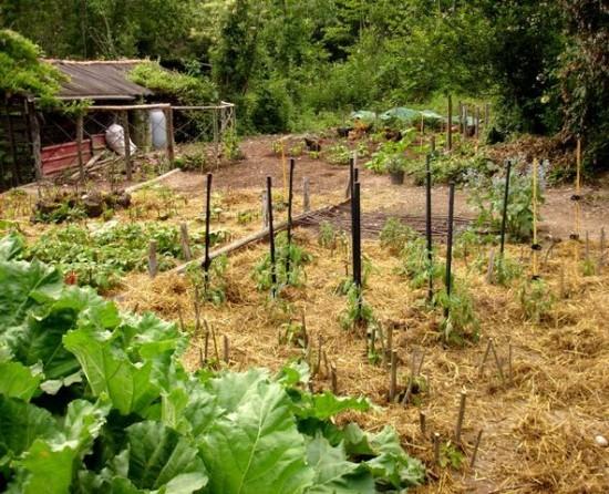 Un huerto de bajo mantenimiento for Como quitar la mala hierba del jardin