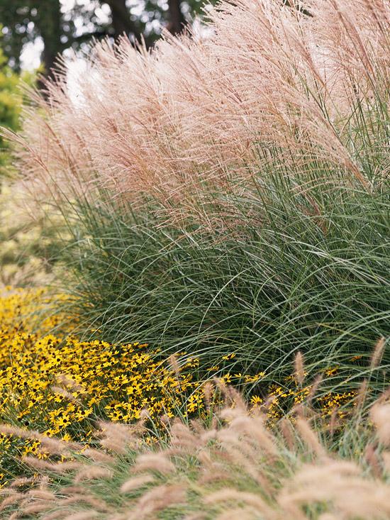 15-usos-de-la-hierba-ornamental-01