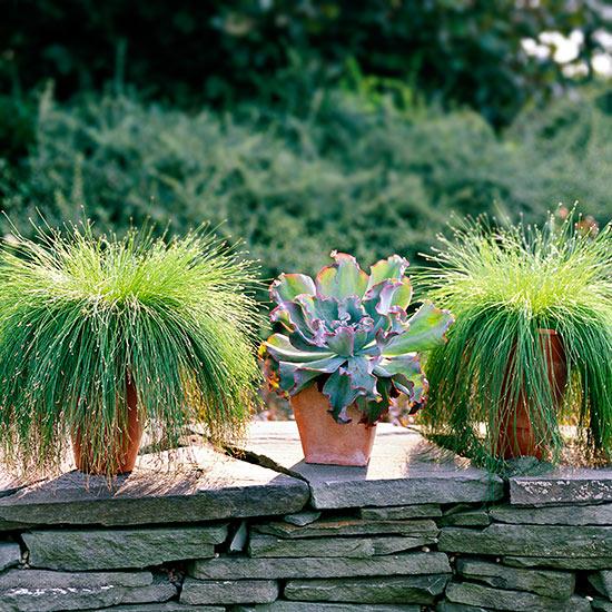 15-usos-de-la-hierba-ornamental-02