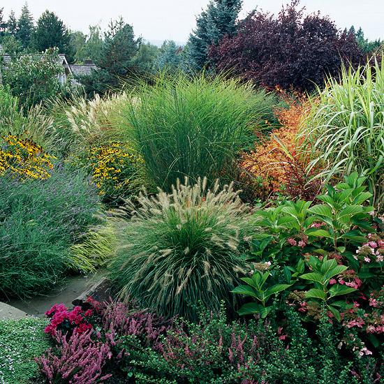 15-usos-de-la-hierba-ornamental-03