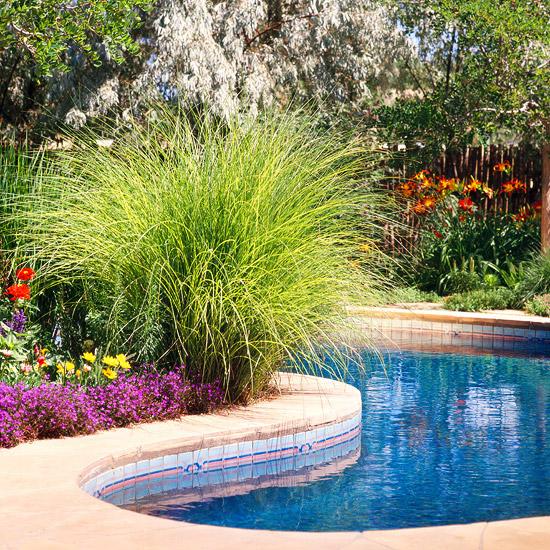 15-usos-de-la-hierba-ornamental-04