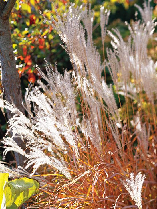 15-usos-de-la-hierba-ornamental-09