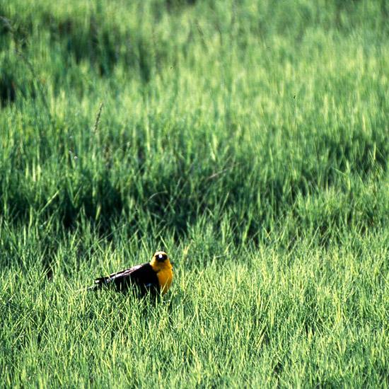 15-usos-de-la-hierba-ornamental-11