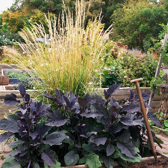 15-usos-de-la-hierba-ornamental-12
