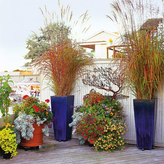 15 usos de las gram neas ornamentales for Gramineas ornamentales vivero