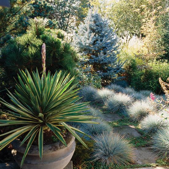 15-usos-de-la-hierba-ornamental-14