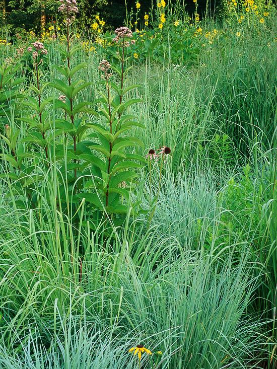 15-usos-de-la-hierba-ornamental-15