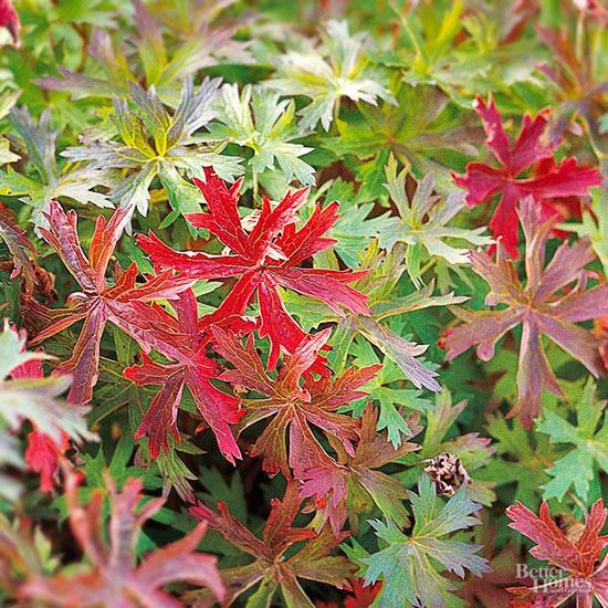 6-plantas-perennes-con-colorido-otonal-02