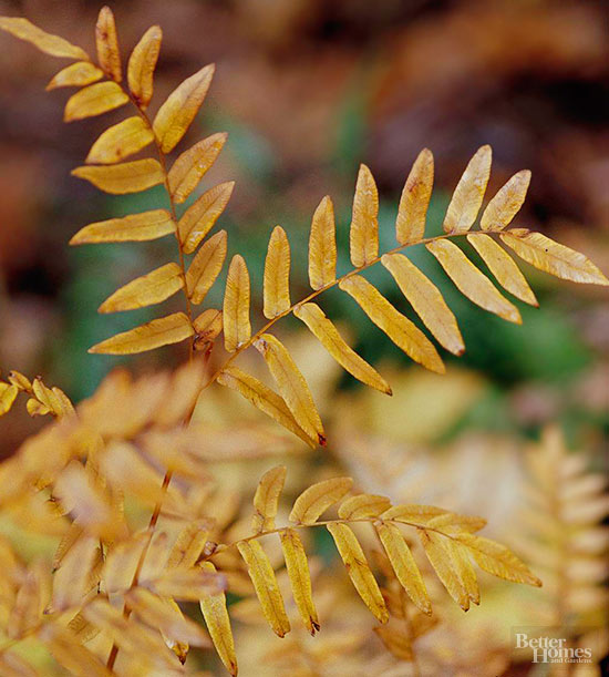 6-plantas-perennes-con-colorido-otonal-03