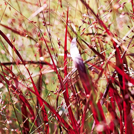 6-plantas-perennes-con-colorido-otonal-04