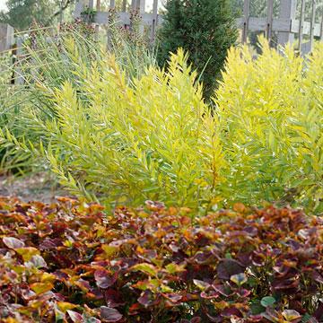 6-plantas-perennes-con-colorido-otonal-05