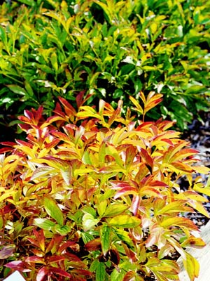 6-plantas-perennes-con-colorido-otonal-06