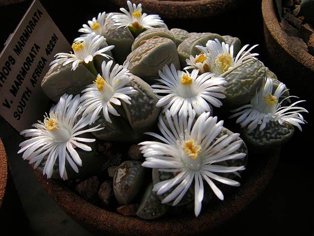 cactus-piedra-4