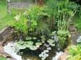 imagen Cómo construir un estanque en tu jardín