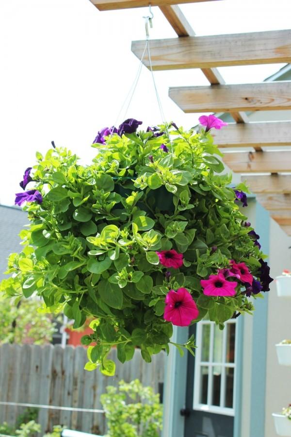 como-preparar-una-cesta-colgante-con-flores-01