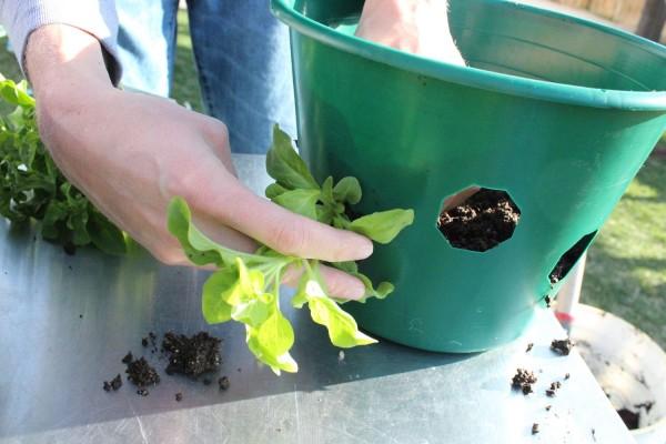 como-preparar-una-cesta-colgante-con-flores-06