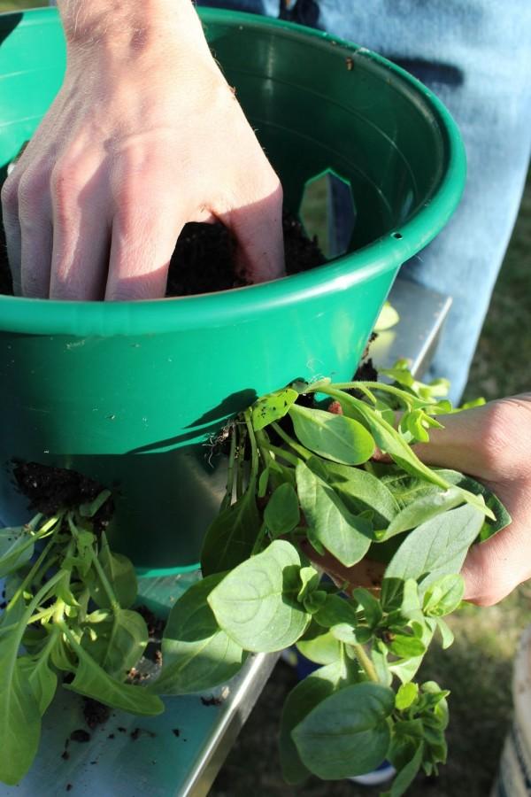 como-preparar-una-cesta-colgante-con-flores-09