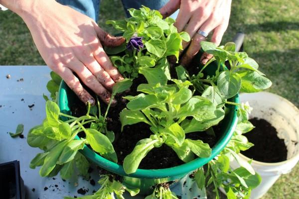 como-preparar-una-cesta-colgante-con-flores-10