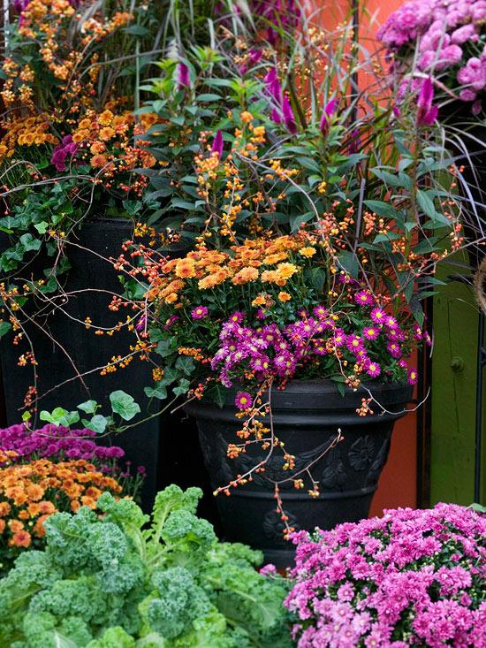 el-crisantemo-la-reina-del-jardin-otonal-01