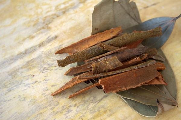 el-cultivo-del-arbol-de-la-canela-03