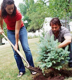 que-plantar-en-otono-02