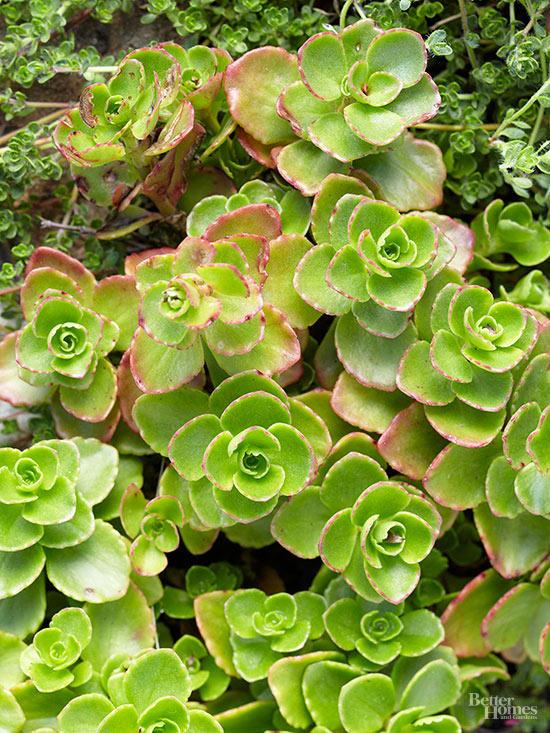 15-plantas-para-inviernos-duros-01