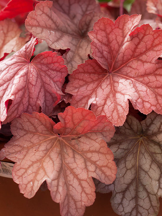 15-plantas-para-inviernos-duros-06