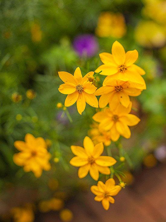15-plantas-para-inviernos-duros-08