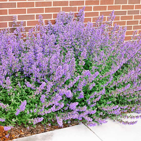 15-plantas-para-inviernos-duros-10