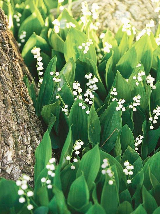 15-plantas-para-inviernos-duros-11