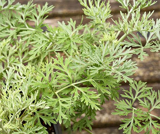 15-plantas-para-inviernos-duros-12