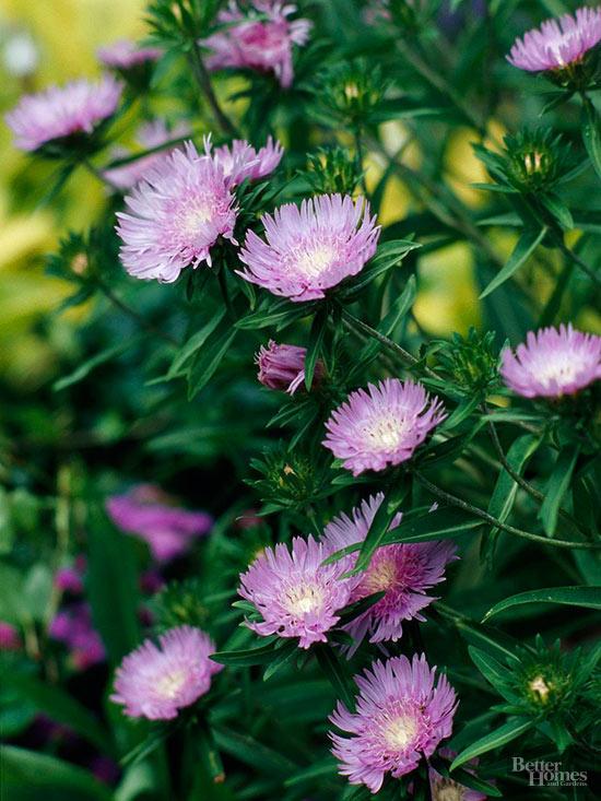 15-plantas-para-inviernos-duros-14