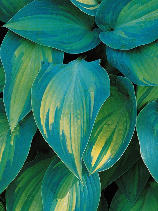 15-plantas-para-inviernos-duros-15
