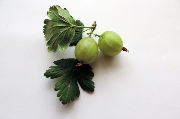 el-cultivo-de-la-grosella-espinosa-03
