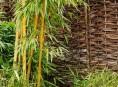 imagen Evitar que el bambú se convierta en un problema