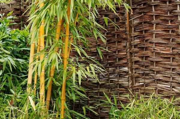evitar-que-el-bambu-se-convierta-en-un-problema-01