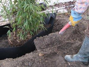 Evitar que el bamb se convierta en un problema - Comment se debarrasser definitivement des bambous ...