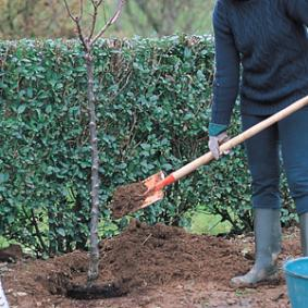 plantar-un-frutal-comprado-en-maceta-04