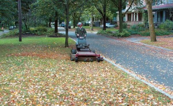 aprovechar-las-hojas-caidas-para-mejorar-el-suelo-01