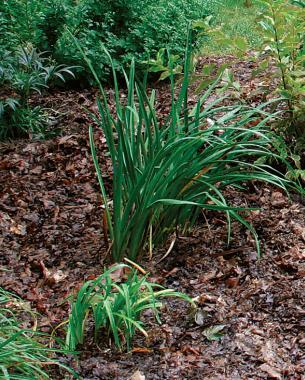 aprovechar-las-hojas-caidas-para-mejorar-el-suelo-02