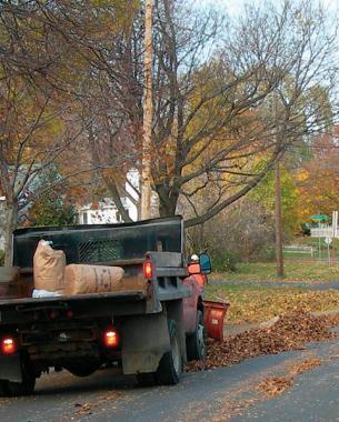 aprovechar-las-hojas-caidas-para-mejorar-el-suelo-03